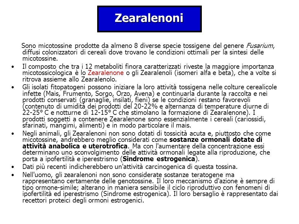 Zearalenoni