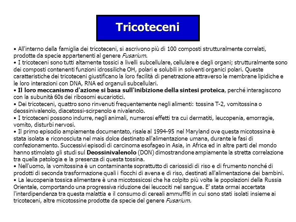 Tricoteceni