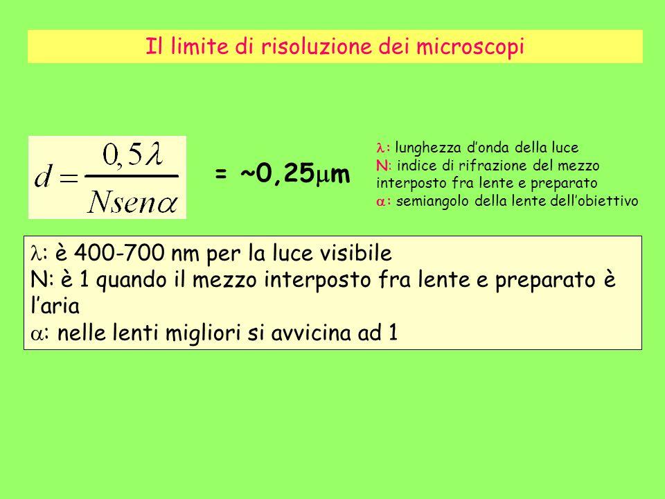 Il limite di risoluzione dei microscopi