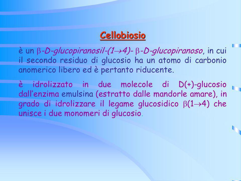 Cellobiosio