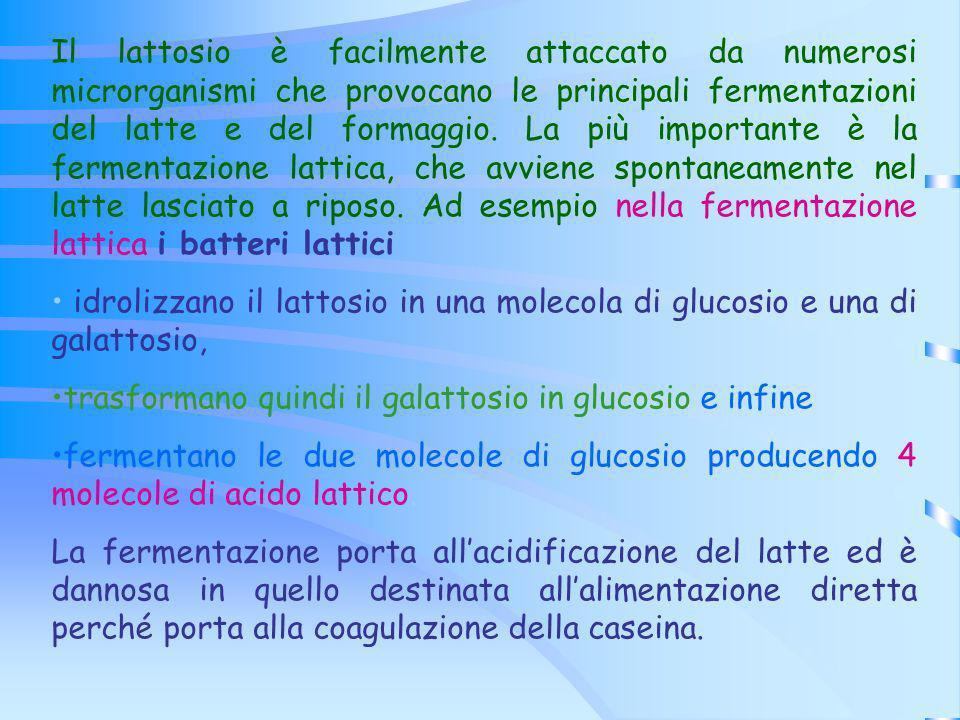 Il lattosio è facilmente attaccato da numerosi microrganismi che provocano le principali fermentazioni del latte e del formaggio. La più importante è la fermentazione lattica, che avviene spontaneamente nel latte lasciato a riposo. Ad esempio nella fermentazione lattica i batteri lattici