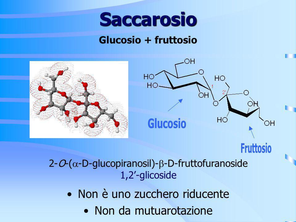 Saccarosio Non è uno zucchero riducente Non da mutuarotazione