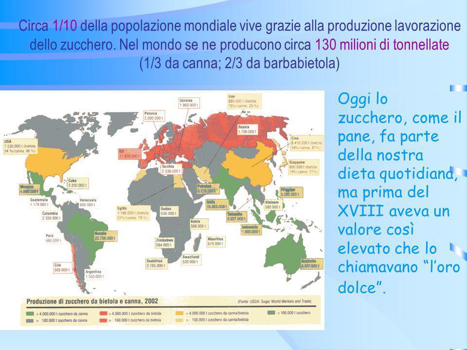 Circa 1/10 della popolazione mondiale vive grazie alla produzione lavorazione dello zucchero. Nel mondo se ne producono circa 130 milioni di tonnellate (1/3 da canna; 2/3 da barbabietola)