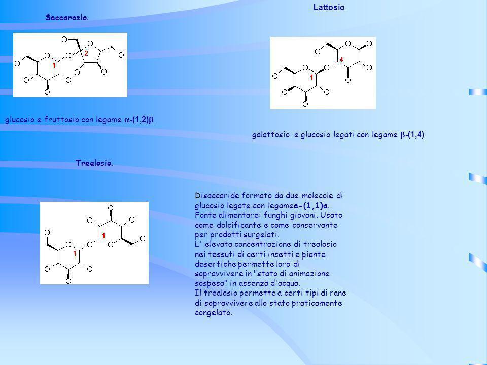 Lattosio. Saccarosio. glucosio e fruttosio con legame a-(1,2)b. galattosio e glucosio legati con legame b-(1,4).
