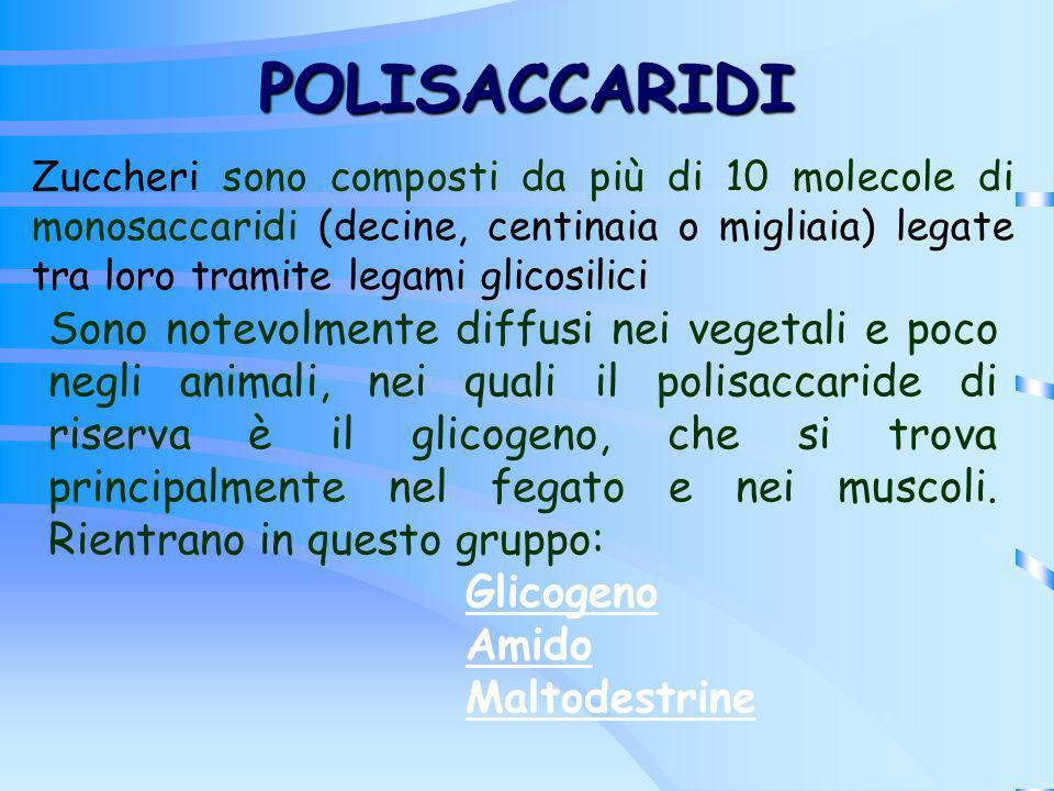 POLISACCARIDI Zuccheri sono composti da più di 10 molecole di monosaccaridi (decine, centinaia o migliaia) legate tra loro tramite legami glicosilici.