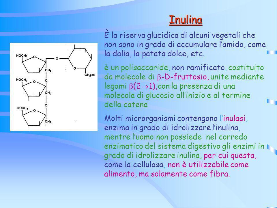 Inulina È la riserva glucidica di alcuni vegetali che non sono in grado di accumulare l'amido, come la dalia, la patata dolce, etc.