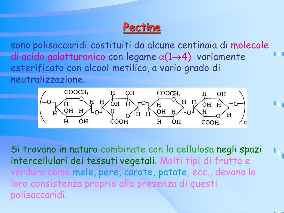 Pectine