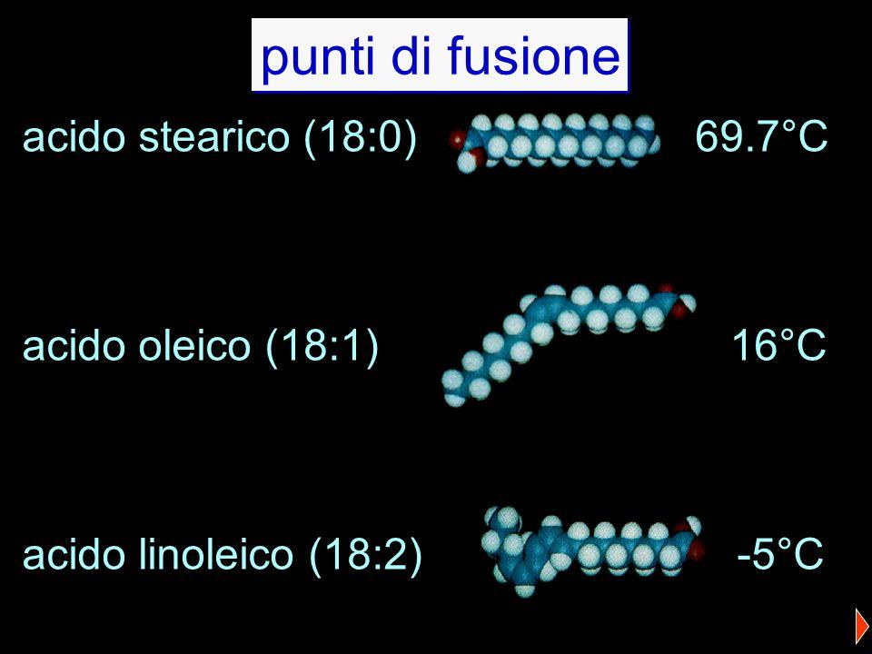 punti di fusione acido stearico (18:0) 69.7°C acido oleico (18:1) 16°C