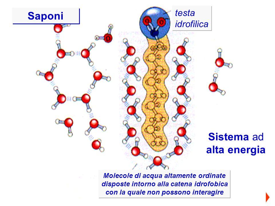 Saponi Sistema ad alta energia testa idrofilica testa idrofilica