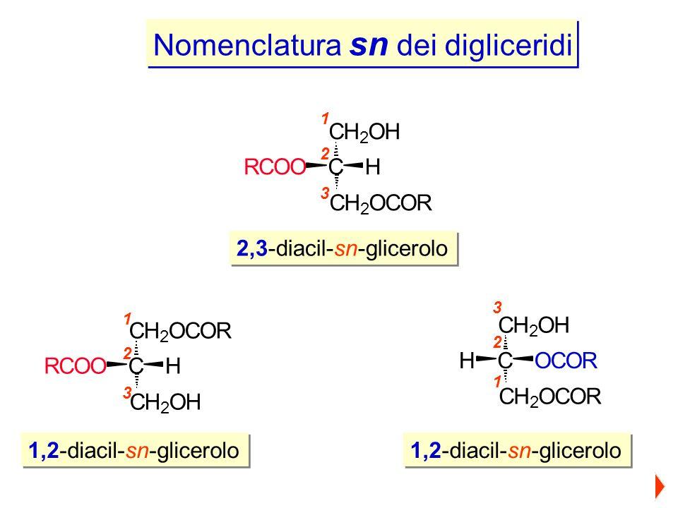Nomenclatura sn dei digliceridi