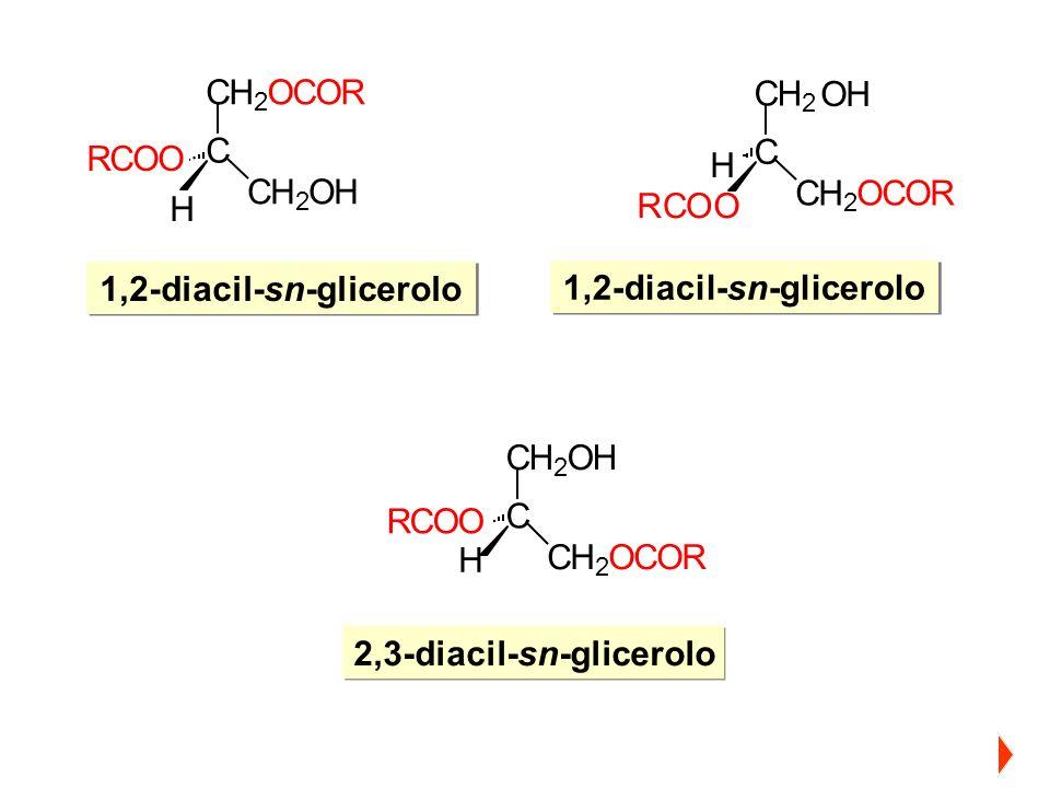 1,2-diacil-sn-glicerolo 1,2-diacil-sn-glicerolo