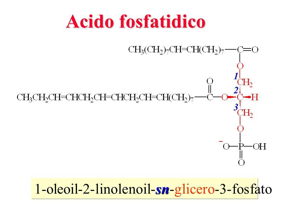 Acido fosfatidico 1 2 3 1-oleoil-2-linolenoil-sn-glicero-3-fosfato