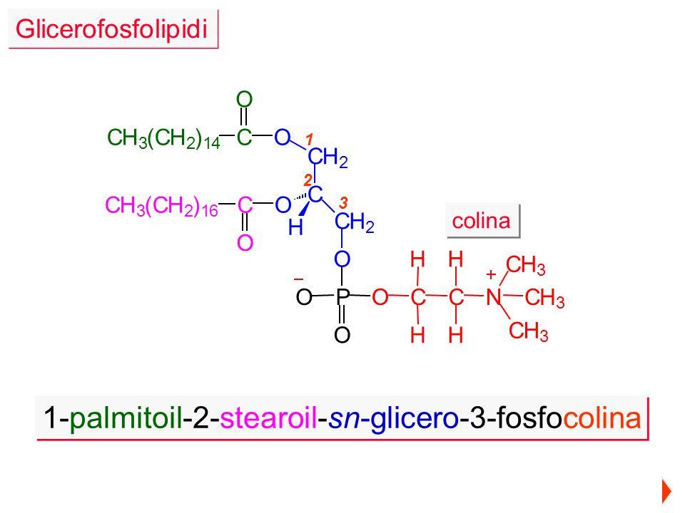 1-palmitoil-2-stearoil-sn-glicero-3-fosfocolina