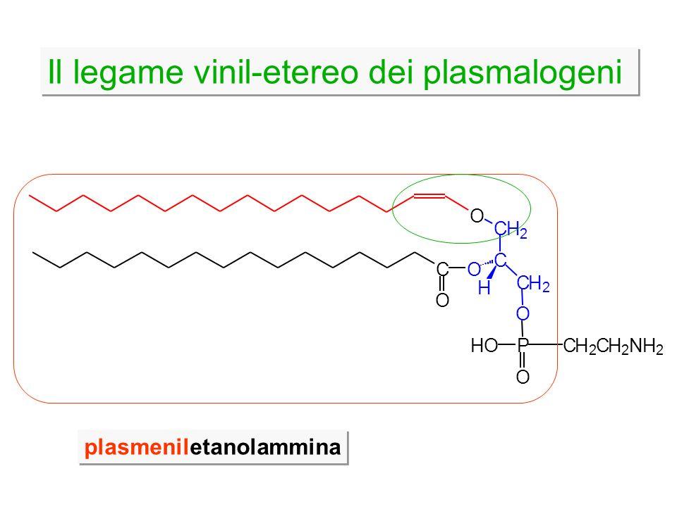 Il legame vinil-etereo dei plasmalogeni