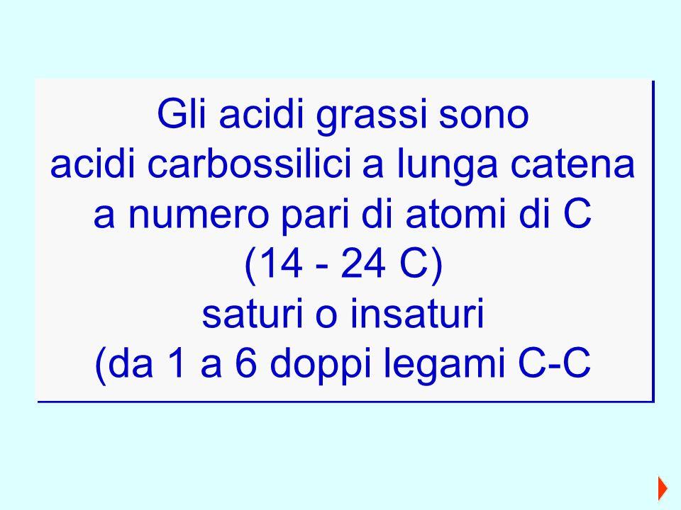 acidi carbossilici a lunga catena a numero pari di atomi di C