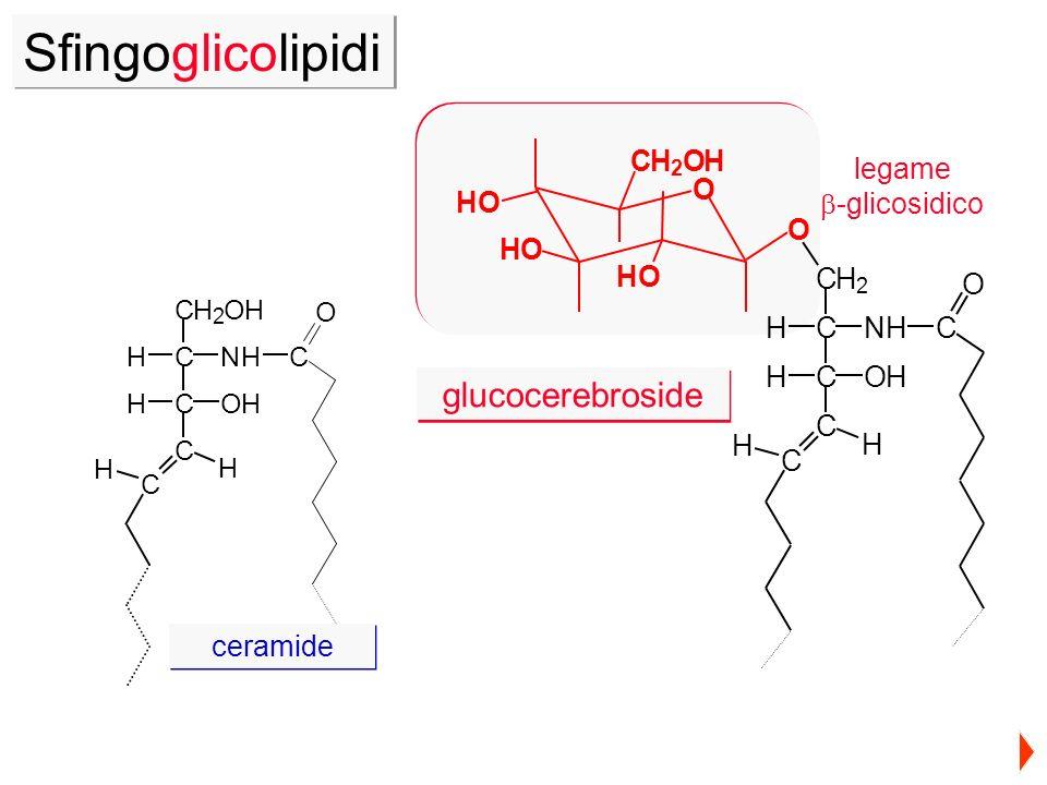 Sfingoglicolipidi glucocerebroside O C H legame b-glicosidico H C O N