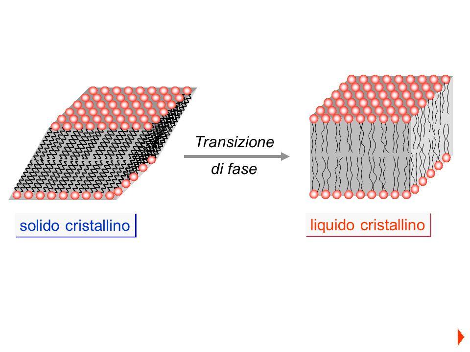 Transizione di fase solido cristallino liquido cristallino