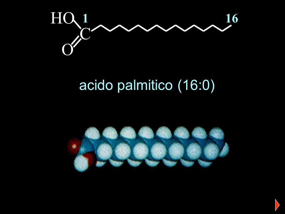 HO 1 16 C O acido palmitico (16:0)