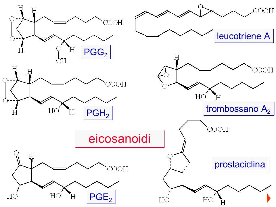 leucotriene A PGG2 trombossano A2 PGH2 eicosanoidi prostaciclina PGE2