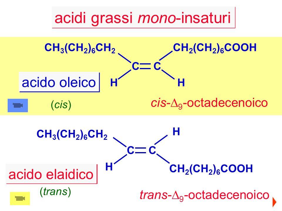 acidi grassi mono-insaturi