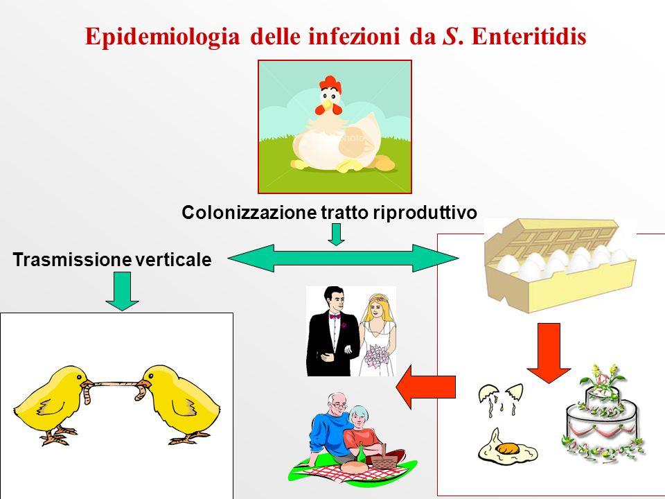Epidemiologia delle infezioni da S. Enteritidis