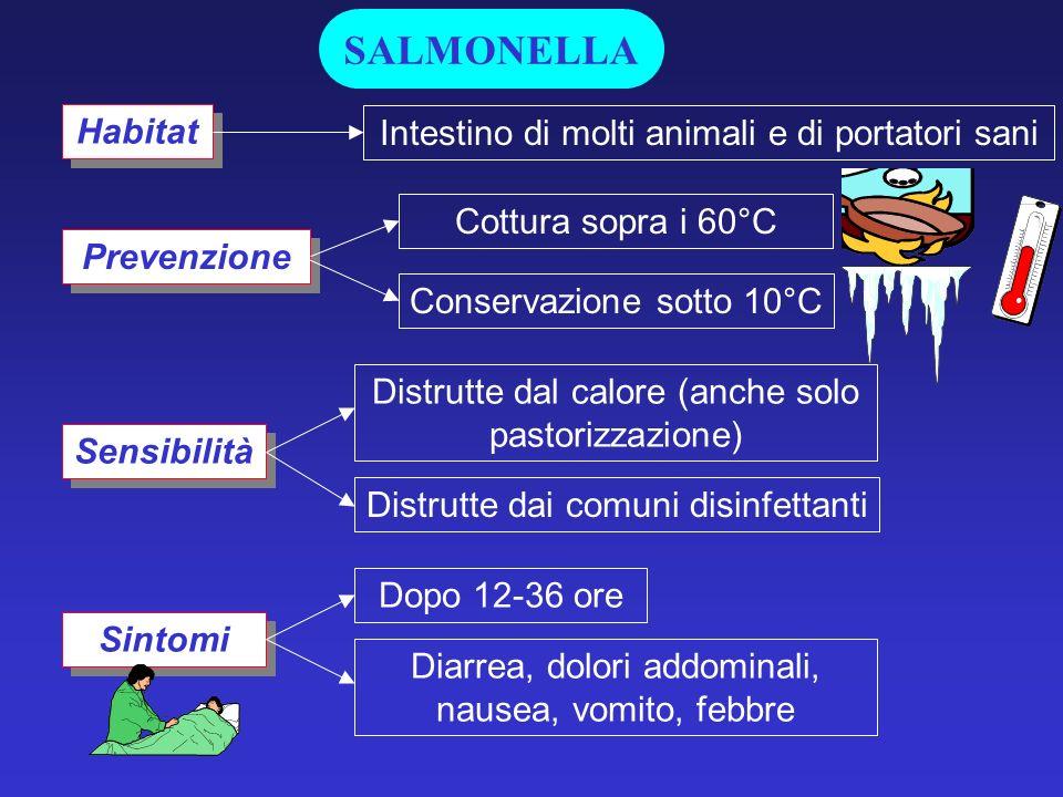 SALMONELLA Habitat Intestino di molti animali e di portatori sani
