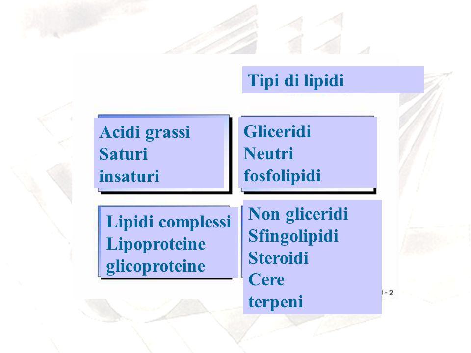 Tipi di lipidi Acidi grassi. Saturi. insaturi. Gliceridi. Neutri. fosfolipidi. Non gliceridi.
