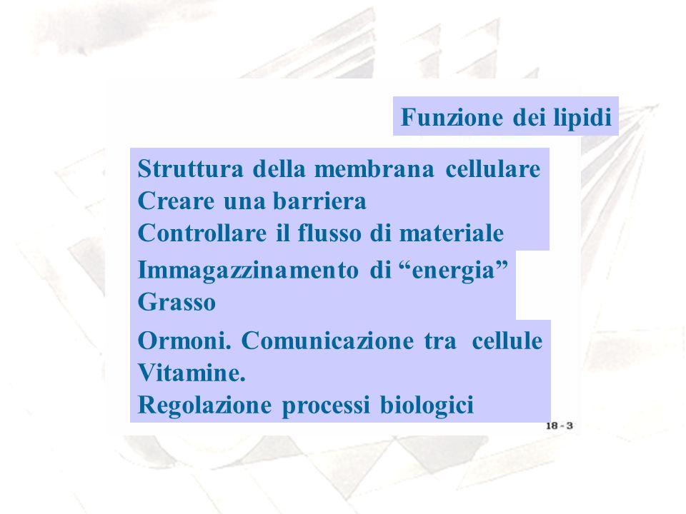 Funzione dei lipidi Struttura della membrana cellulare. Creare una barriera. Controllare il flusso di materiale.