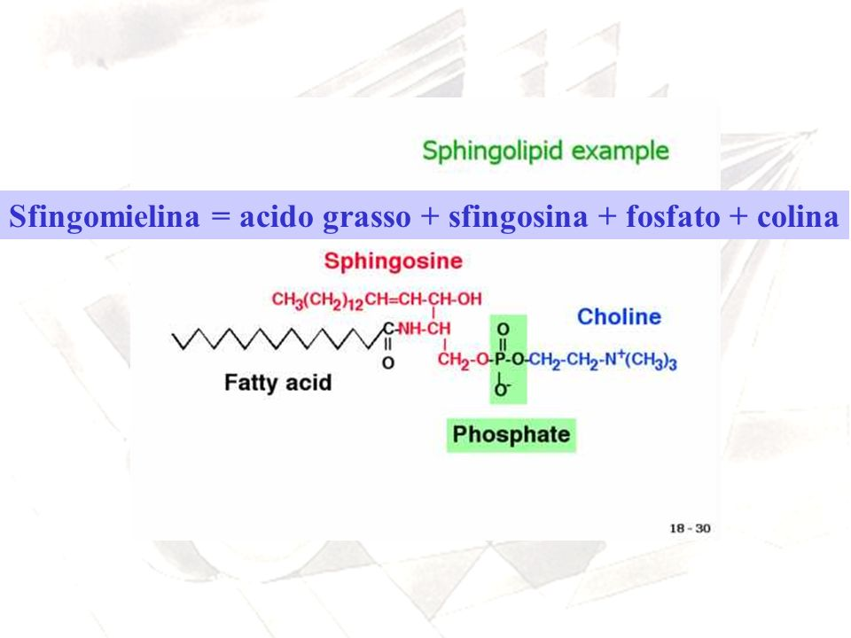 Sfingomielina = acido grasso + sfingosina + fosfato + colina