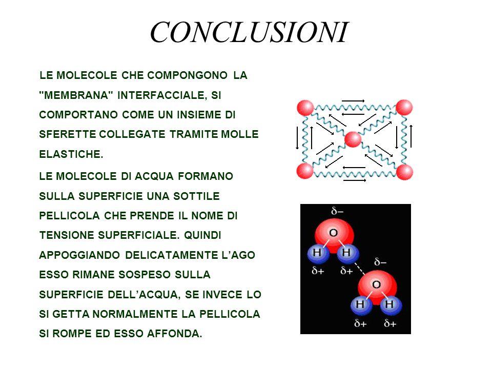 CONCLUSIONI LE MOLECOLE CHE COMPONGONO LA MEMBRANA INTERFACCIALE, SI COMPORTANO COME UN INSIEME DI SFERETTE COLLEGATE TRAMITE MOLLE ELASTICHE.