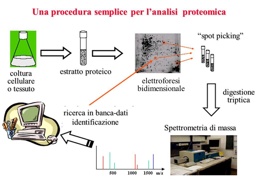 Una procedura semplice per l'analisi proteomica
