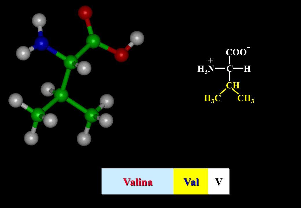 COO- C H H3N + CH CH3 H3C Valina Val V