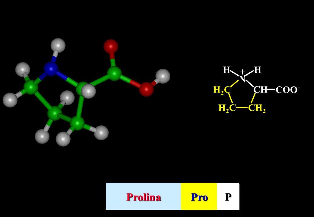 H N CH COO- CH2 H2C + Prolina Pro P