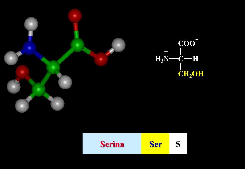 COO- + H3N C H CH2OH Serina Ser S
