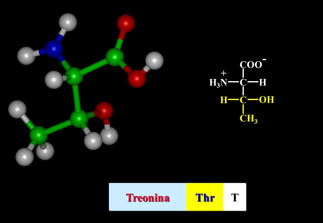 C CH3 H OH COO- H3N + Treonina Thr T
