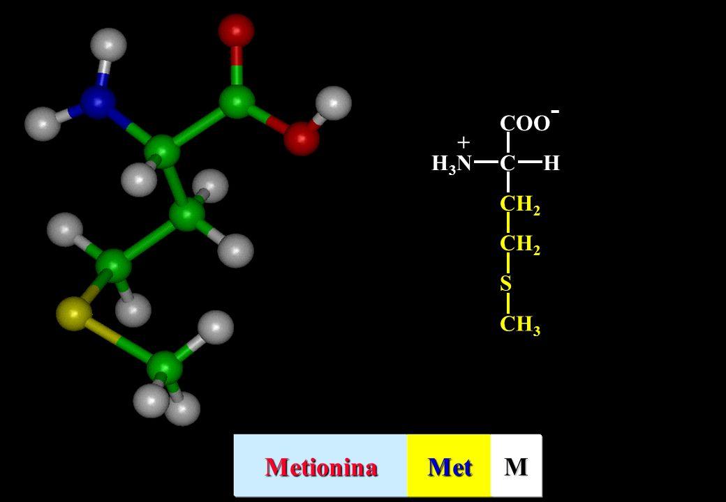 CH2 S CH3 COO- C H H3N + Metionina Met M