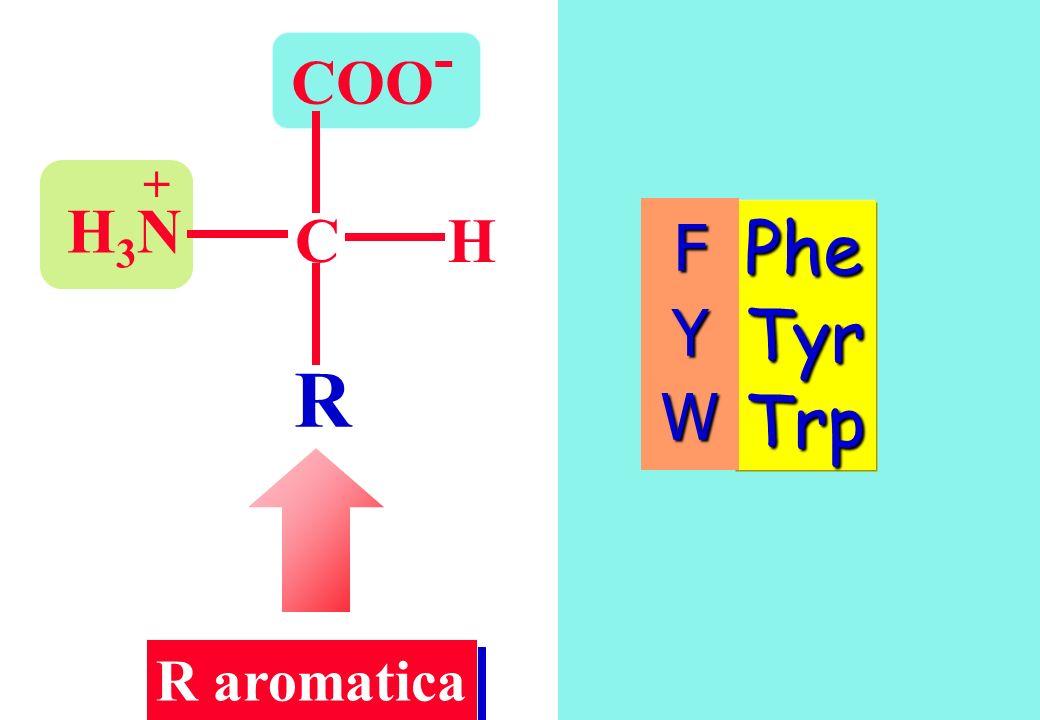 COO- + H3N C H F Y W Phe Tyr Trp R R aromatica