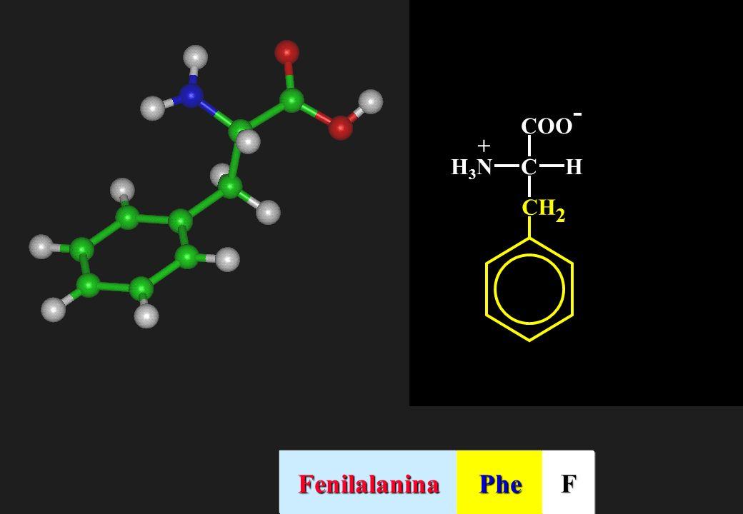 COO- C H H3N + CH2 Fenilalanina Phe F