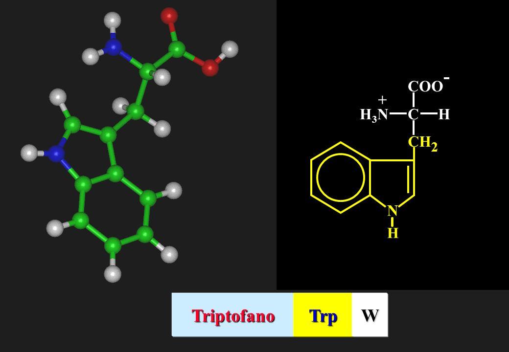COO- C H H3N + N CH2 Triptofano Trp W