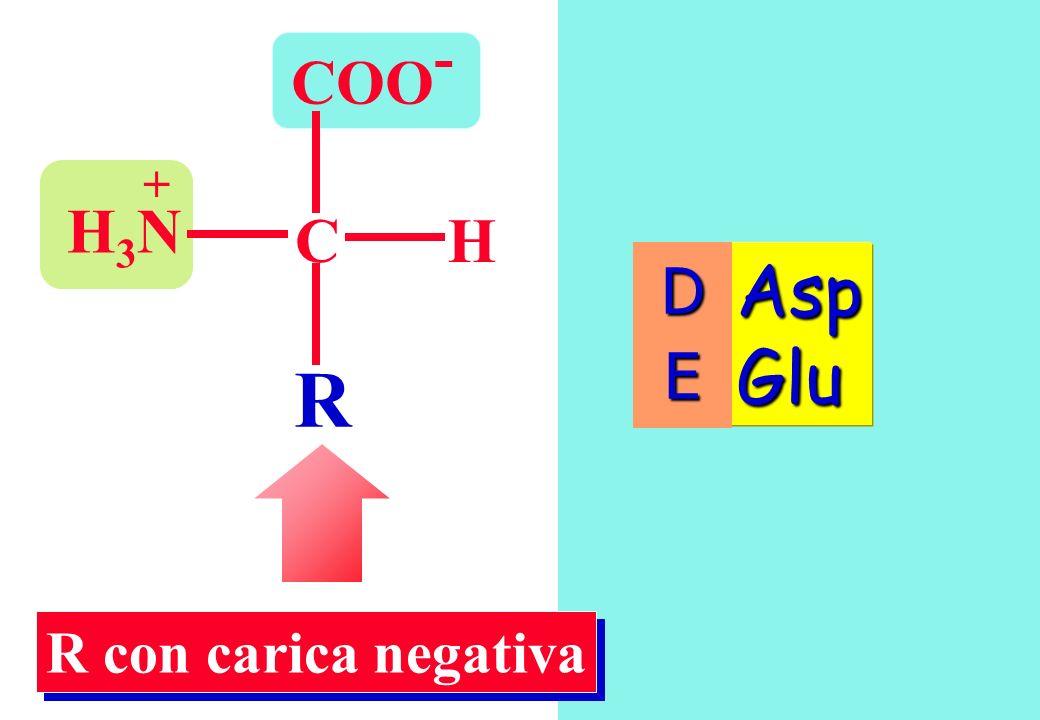 COO- + H3N C H D E Asp Glu R R con carica negativa