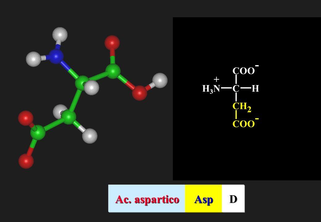 CH2 COO- C H H3N + Ac. aspartico Asp D
