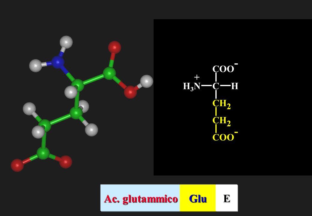 CH2 COO- C H H3N + Ac. glutammico Glu E