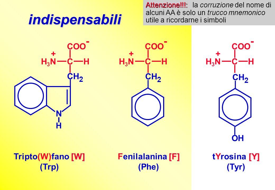 indispensabili COO- C H H3N + N CH2 COO- C H H3N + CH2 OH COO- C H H3N