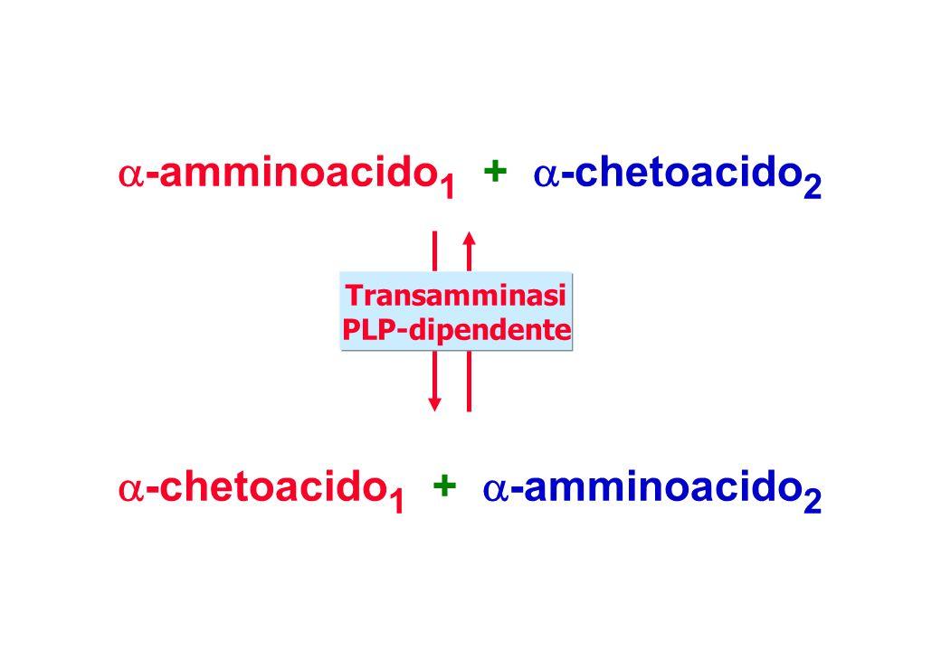 -amminoacido1 + -chetoacido2