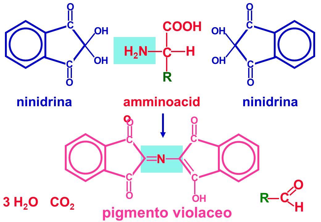 pigmento violaceo COOH C H R H2N ninidrina amminoacido ninidrina CO2 R