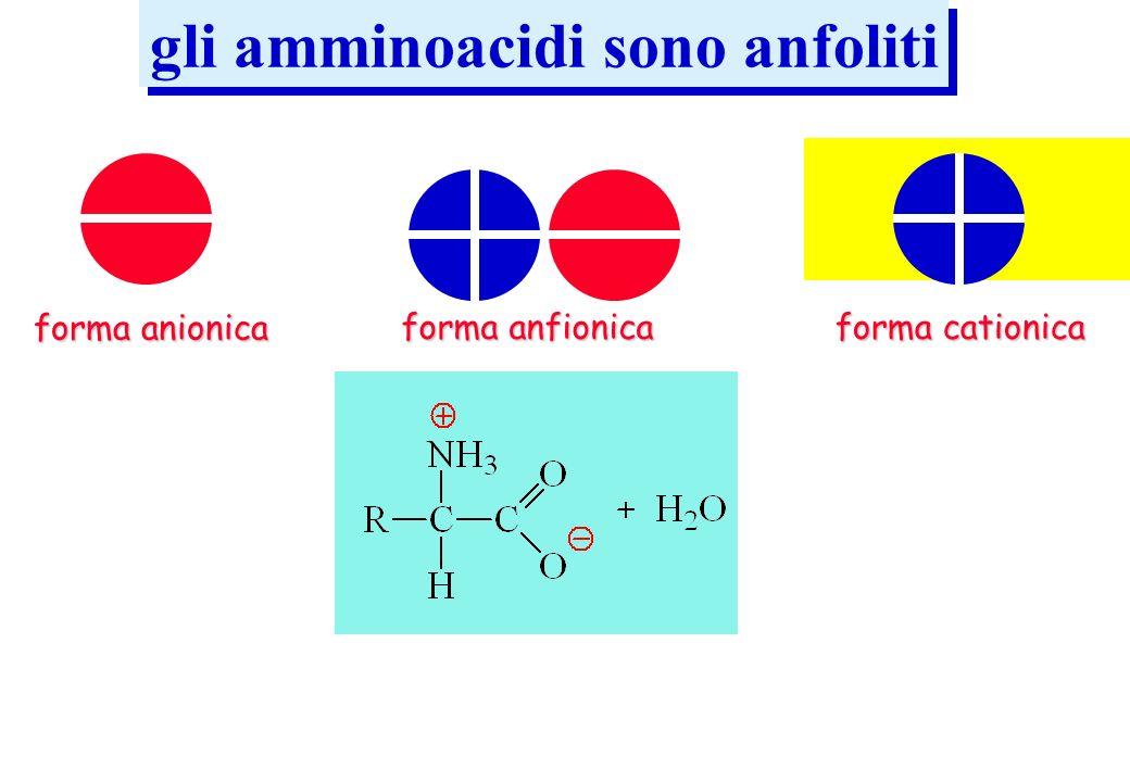 gli amminoacidi sono anfoliti