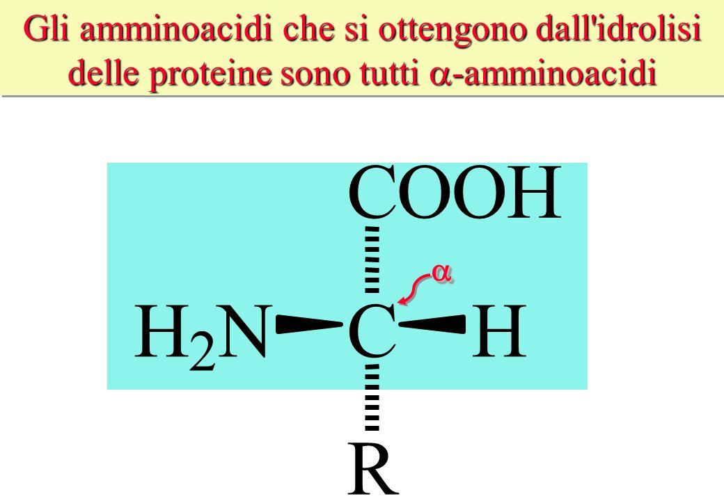 Gli amminoacidi che si ottengono dall idrolisi delle proteine sono tutti a-amminoacidi