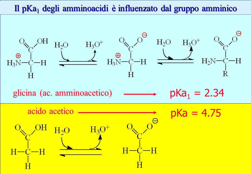 Il pKa1 degli amminoacidi è influenzato dal gruppo amminico
