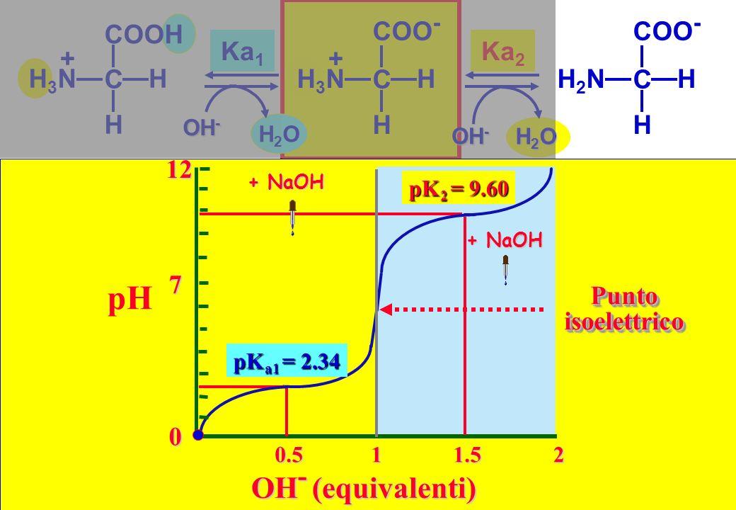 pH OH- (equivalenti) Ka1 COO- C H H3N + Ka2 COO- C H H2N COOH C H H3N