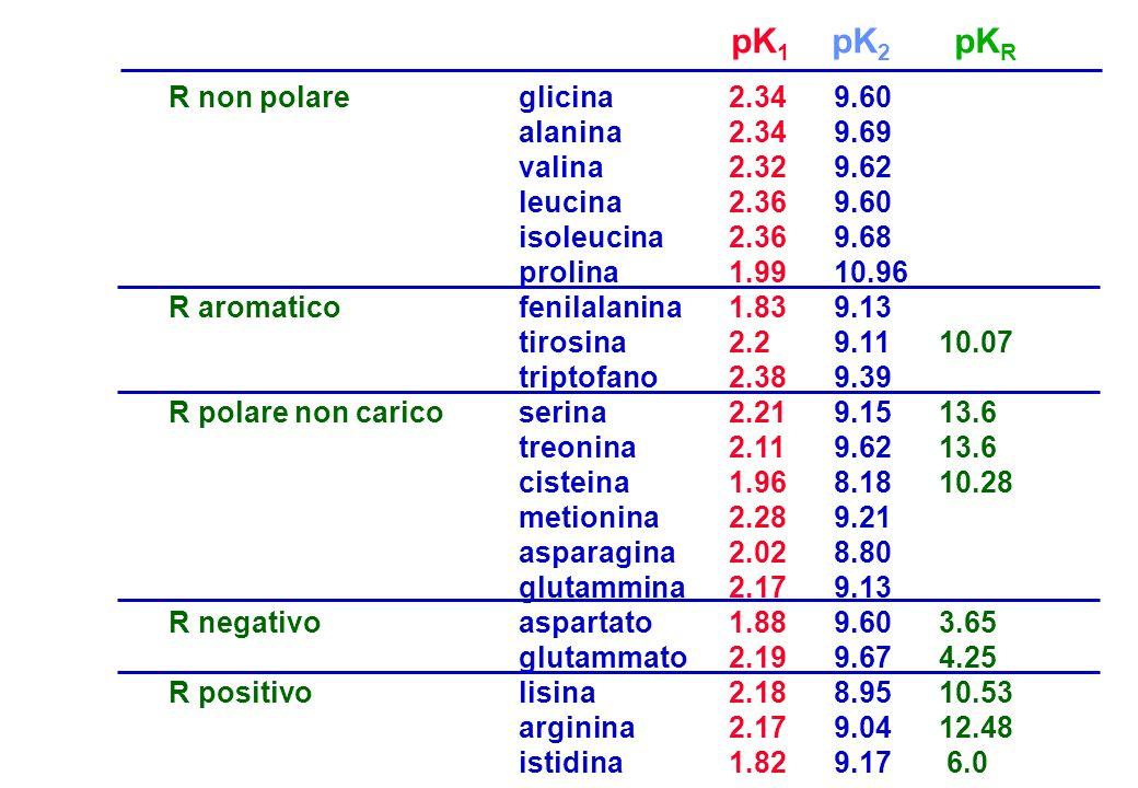 pK1 pK2 pKR R non polare R aromatico R polare non carico R negativo